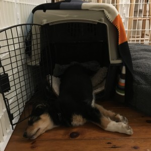 Easing Into Crate Training